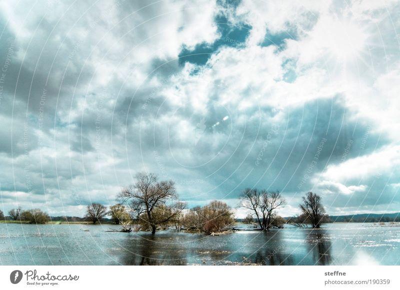 Überschwemmung Landschaft Wolken Sonnenlicht Herbst Winter Schönes Wetter Baum See Fluss Oder Polder beobachten träumen Hochwasser Schwedt Farbfoto