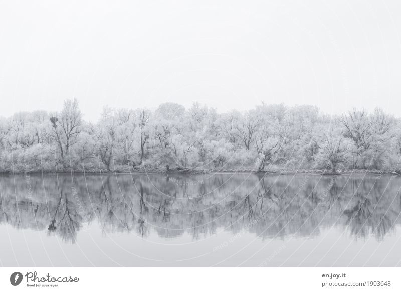 Nebelspuren Umwelt Natur Landschaft Himmel Winter Eis Frost Schnee Schneefall Baum Wald Seeufer kalt weiß Traurigkeit Trauer Idylle Religion & Glaube ruhig