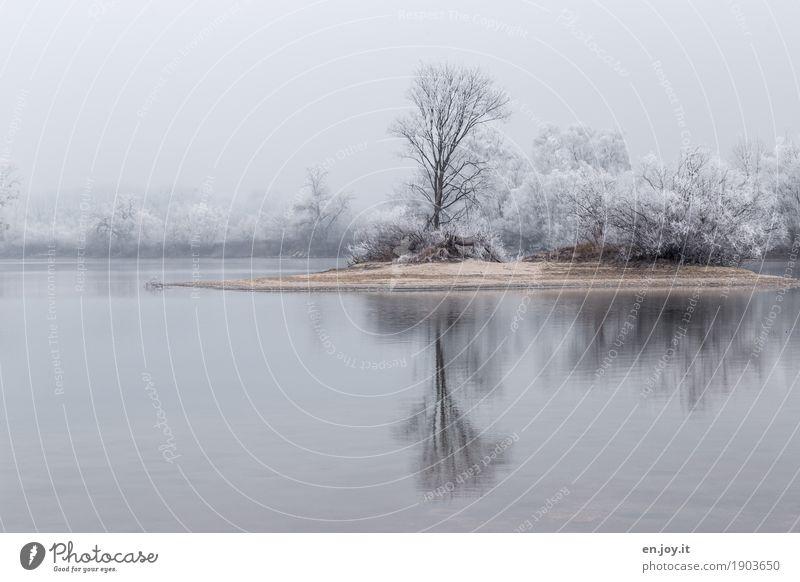 einsame Insel Umwelt Natur Landschaft Pflanze Himmel Winter Eis Frost Schnee Baum Seeufer kalt weiß Traurigkeit Trauer Sehnsucht ruhig träumen