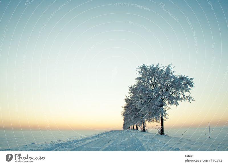 Wegbegleiter Himmel Natur Baum Einsamkeit Winter Landschaft Umwelt kalt Schnee Wege & Pfade hell Luft Horizont träumen Stimmung natürlich