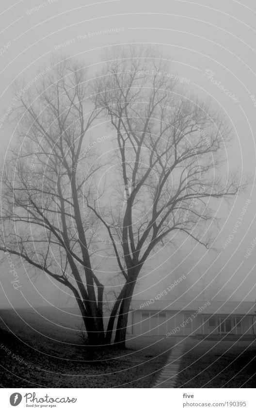 er wacht. Natur Baum Winter schwarz dunkel kalt Wiese Traurigkeit Gebäude Stimmung nass frei einfach Müdigkeit Schwarzweißfoto