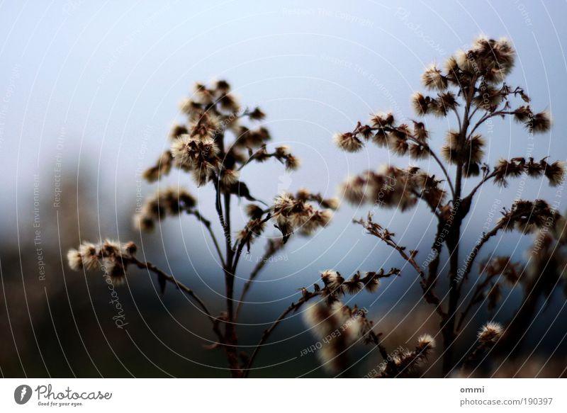 sporadische freude Natur Pflanze Gras braun Feld trist Sträucher authentisch einfach natürlich trocken Unschärfe Wildpflanze