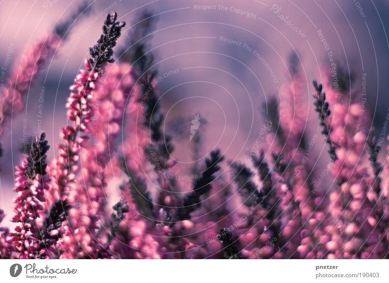 Ich<3Bokeh Natur schön Blume Pflanze Sommer Gefühle Blüte Frühling Glück Park Zufriedenheit Stimmung rosa Wetter Umwelt frisch