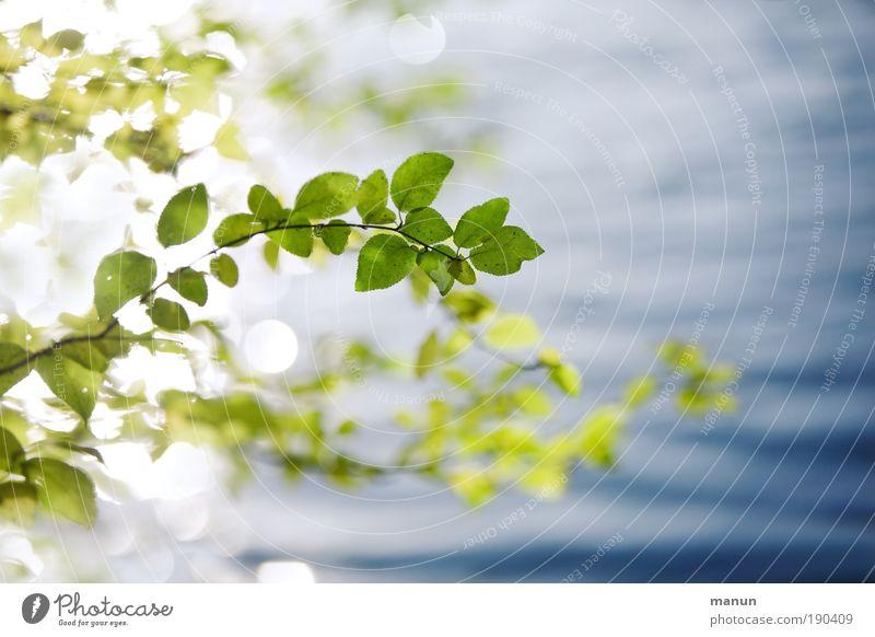 ... innehalten Natur blau grün Sommer Wasser Erholung Blatt ruhig Pflanze Frühling Herbst hell glänzend Design Zufriedenheit frisch