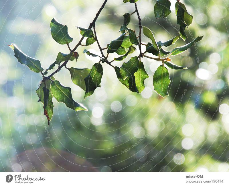 when the earth awakes. Natur Pflanze grün schön Erholung ruhig Umwelt Leben natürlich hell glänzend ästhetisch Ast Schönes Wetter Zweig Umweltschutz