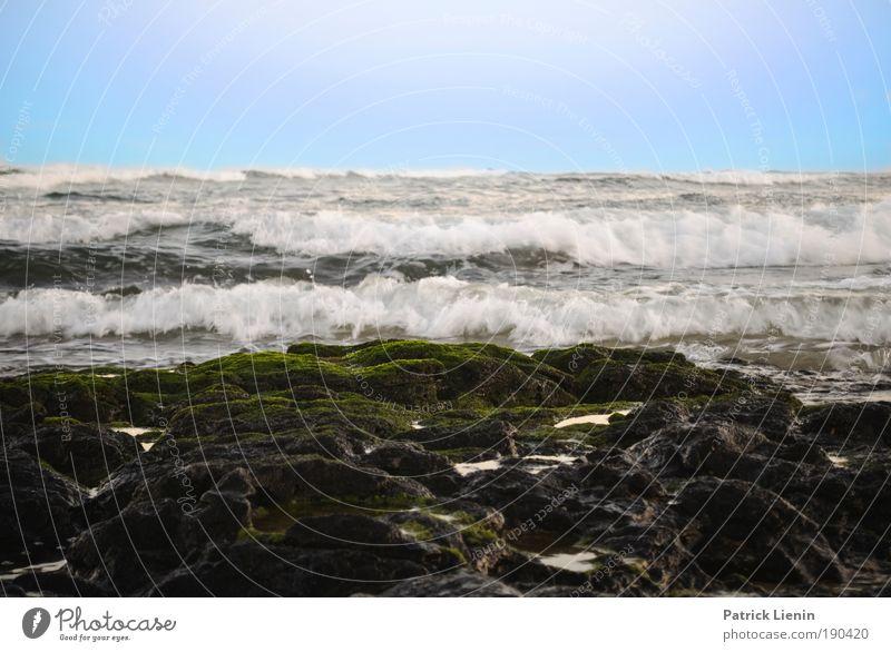 flat rock Natur Wasser Sommer Ferien & Urlaub & Reisen Meer Ferne Umwelt Küste Wellen Ausflug Felsen gefährlich bedrohlich Bucht Moos Froschperspektive