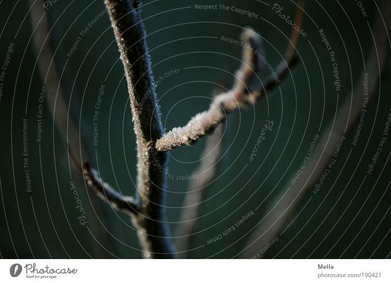 Baum-Gänsehaut Umwelt Natur Pflanze Winter Klima Klimawandel Eis Frost Ast frieren dunkel kalt natürlich ruhig Vergänglichkeit verzweigt Abzweigung Farbfoto