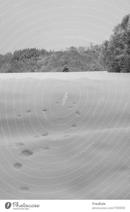 Zipfelmützchen Natur Landschaft Winter Schnee Baum Feld Wald Hügel Menschenleer Ferien & Urlaub & Reisen kalt schön trist schwarz weiß Schwarzweißfoto