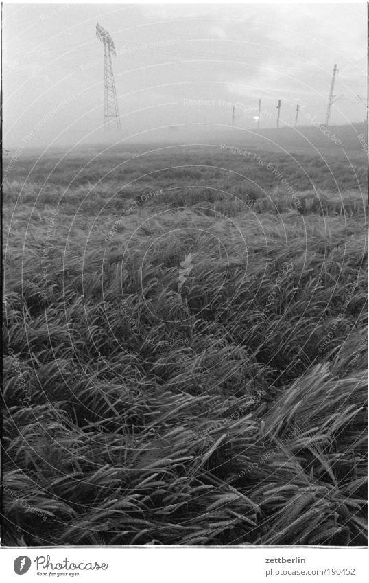Getreide unter Hochspannung Sommer Feld Wellen Nebel Wind Umwelt Energie Energiewirtschaft Elektrizität Kabel Ernte Strommast Kornfeld Leitung wehen