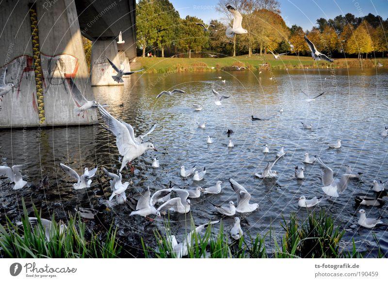 Platz da! Luftverkehr Landschaft Pflanze Tier Wasser Sommer Herbst Schönes Wetter Flussufer See Seeufer Wildtier Vogel Möwe füttern Fütterung Ente Entenvögel