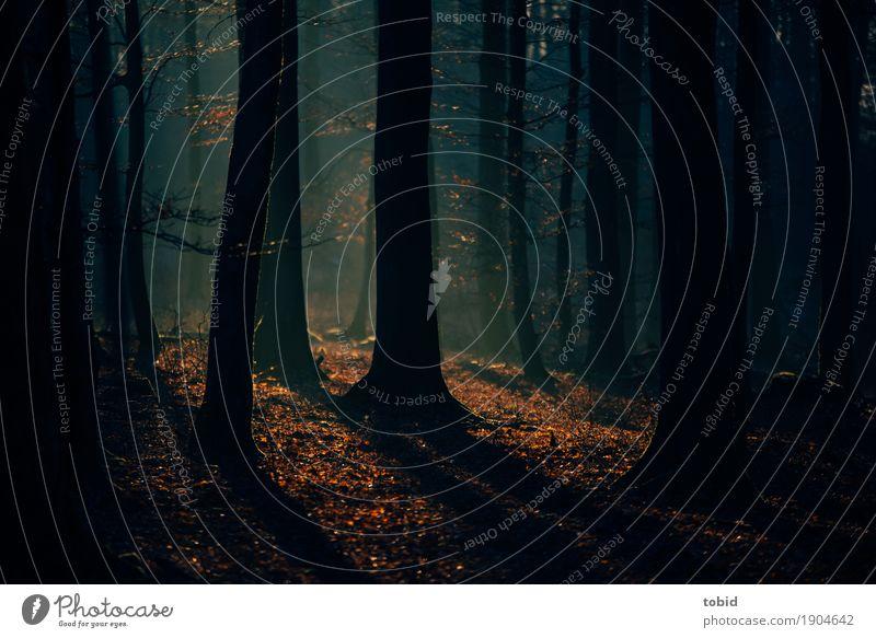 Wintersonne Pt.2 Natur Landschaft Pflanze Herbst Schönes Wetter Nebel Baum Wald dunkel Idylle Herbstlaub Dunst herbstlich Baumstamm Schatten Detailaufnahme