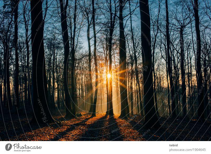 Wintersonne Pt.3 Himmel Natur Pflanze Sonne Baum Landschaft Wald Herbst Idylle Schönes Wetter Baumstamm Herbstlaub herbstlich Schattenspiel