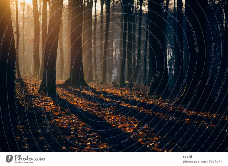 Sunset Natur Landschaft Pflanze Sonnenlicht Herbst Winter Schönes Wetter Baum Moos Wald Hügel leuchten Einsamkeit einzigartig Idylle Blatt herbstlich Herbstlaub