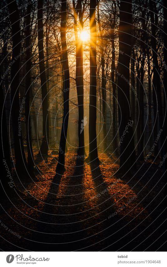 Wintersonne Pt.1 Natur Landschaft Pflanze Himmel Sonne Sonnenaufgang Sonnenuntergang Schönes Wetter Baum Wald Urwald ästhetisch Unendlichkeit Idylle Blatt