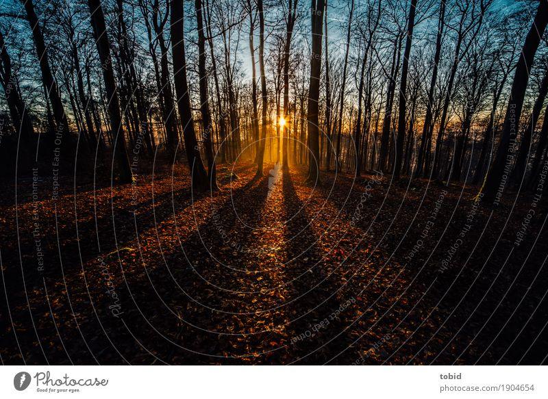 Wintersonne Pt.4 Himmel Natur Pflanze Baum Landschaft Blatt Ferne Wald Herbst Horizont leuchten frei Idylle Schönes Wetter Unendlichkeit