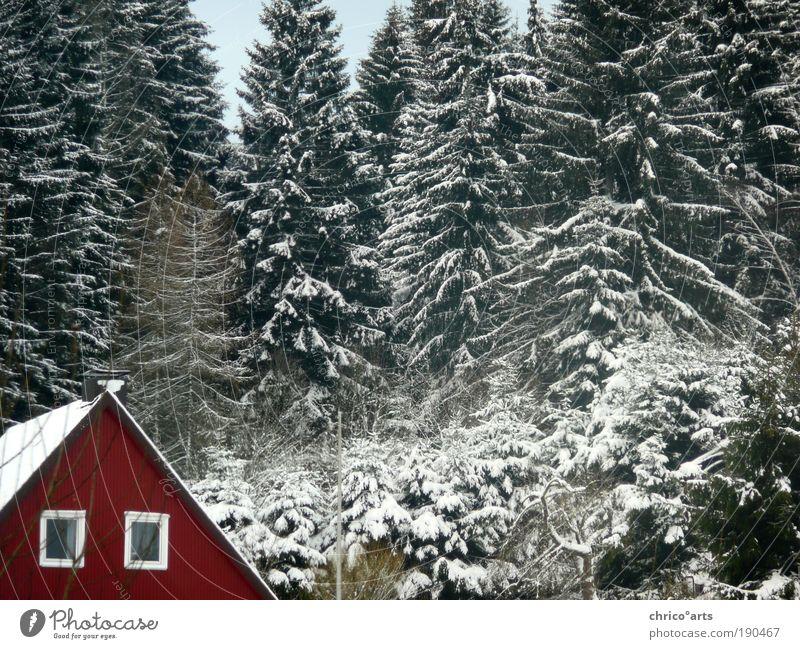 Das rote Haus an der nächsten Ecke links Natur Landschaft Winter Wetter Schönes Wetter schlechtes Wetter Eis Frost Schnee Baum Grünpflanze Wildpflanze Wald