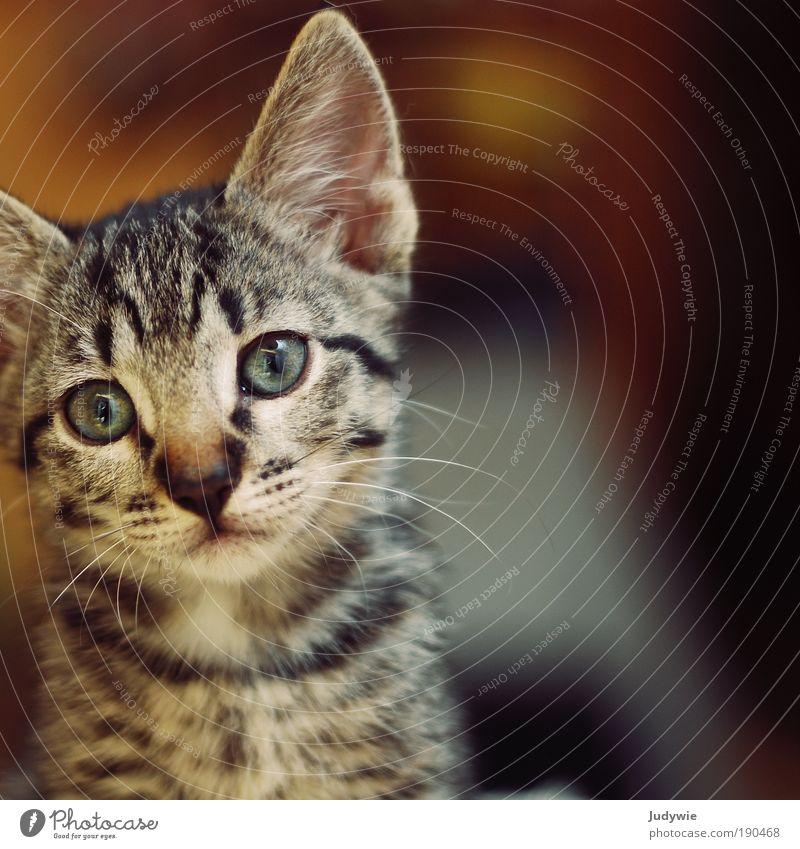 Unschuld Katze Natur Tier Umwelt Gefühle klein Kindheit Tierjunges natürlich niedlich Neugier rein Haustier Geborgenheit Sympathie unschuldig