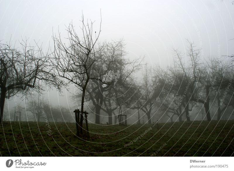 nebulös Natur Baum Pflanze ruhig kalt Wiese dunkel Herbst Landschaft Umwelt Gras Garten Regen Park Kunst Eis