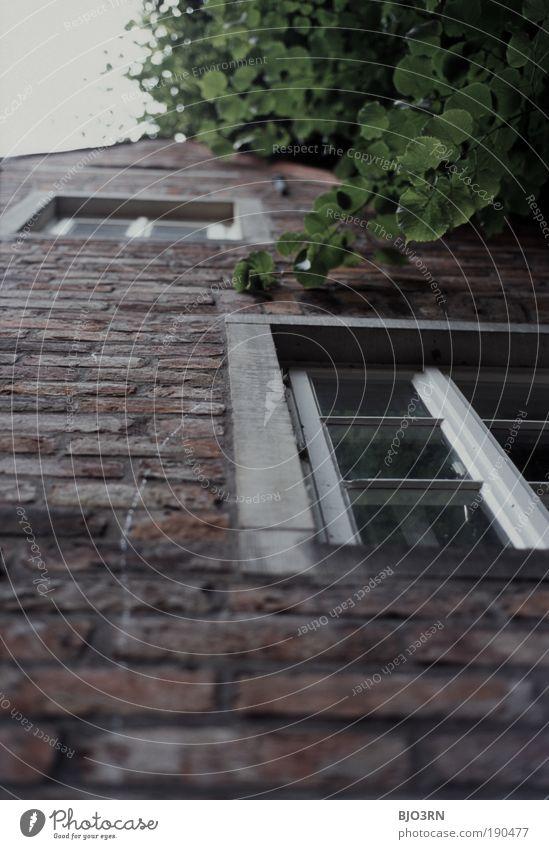 Hinaufschauen in Bremen Hansestadt Deutschland Europa Altstadt Menschenleer Haus Gebäude Architektur Mauer Wand Fassade Fenster Stein Backstein alt historisch