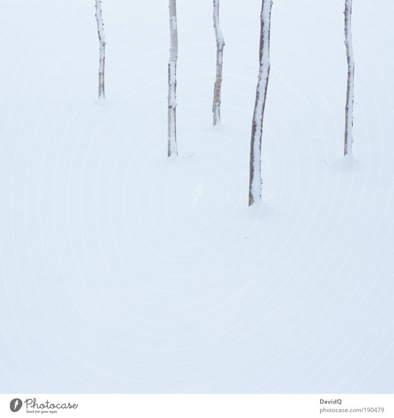 And there's fifteen feet of pure white snow Natur Baum Pflanze Winter Schnee Landschaft Umwelt Klima minimalistisch Linearität
