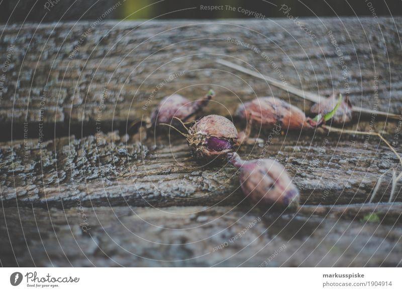 Morgentau Zwiebeln Natur Gesunde Ernährung Freude Umwelt Leben Lifestyle Garten Lebensmittel Freizeit & Hobby Wachstum frisch Blühend Gemüse Bioprodukte Duft