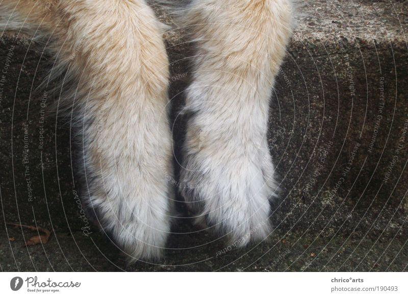 abhängen Wohlgefühl Zufriedenheit Erholung ruhig Tier Haustier Wildtier Hund Fell Pfote 1 Stein Beton Gelassenheit kalt Langeweile Pause Unlust Farbfoto