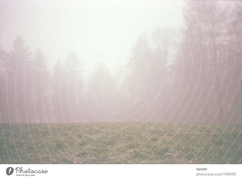 Grenze Natur Park Wiese Wald bedrohlich Nebel Baum dunkel kalt Herbst ruhig Einsamkeit ausgestorben Unschärfe rot Surrealismus leer unheimlich Denken abgelegen