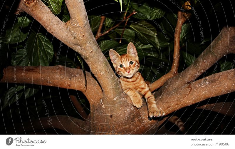 The [Cat]alyst Natur Tier Haustier Katze Fell Krallen Pfote hängen toben schön Freude Coolness abchillen Erholung Baumschule Katzenbaum Farbfoto Außenaufnahme