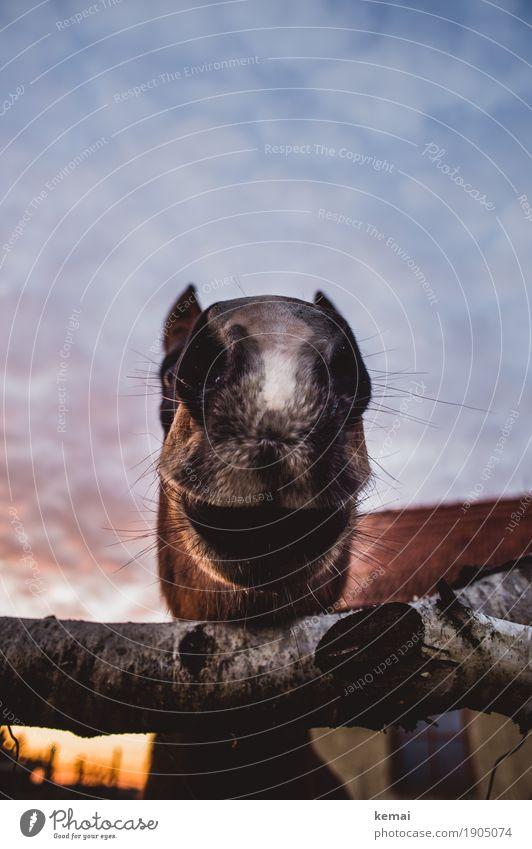 Hi there! Himmel Wolken Tier lustig natürlich außergewöhnlich Freundschaft Fröhlichkeit groß Schönes Wetter Freundlichkeit Neugier nah Pferd Zaun Vertrauen