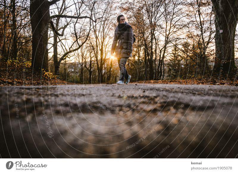Sundownwalk Lifestyle Freizeit & Hobby Ausflug Freiheit Mensch feminin Erwachsene Leben 1 30-45 Jahre Umwelt Landschaft Herbst Schönes Wetter Baum Straße