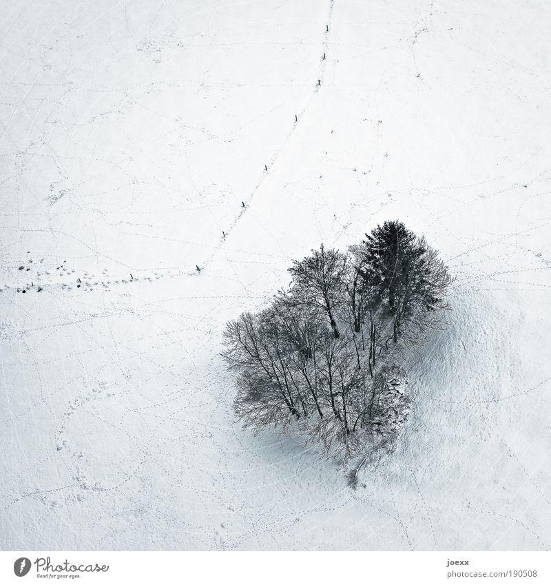 Außenseiter Natur Landschaft Erde Winter Schnee Baum Feld kalt Wäldchen Zaun Vogelperspektive Farbfoto Gedeckte Farben Außenaufnahme Textfreiraum oben Tag