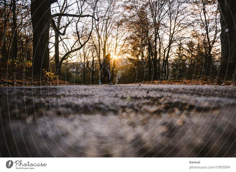 Going home Leben Freizeit & Hobby Spaziergang Spazierweg Mensch feminin Frau Erwachsene 1 Natur Sonnenaufgang Sonnenuntergang Sonnenlicht Herbst Baum Wald