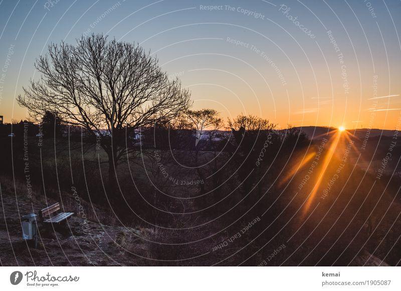 Plätzle an der Sonne Natur schön Baum Landschaft Erholung ruhig Ferne dunkel Wärme Umwelt Leben außergewöhnlich Freiheit Freizeit & Hobby Zufriedenheit leuchten