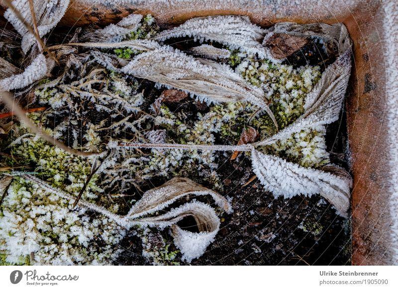 Raureif 7 Natur Pflanze Blatt Winter Umwelt kalt Senior natürlich Tod Garten liegen Erde Eis Vergänglichkeit Wandel & Veränderung trocken