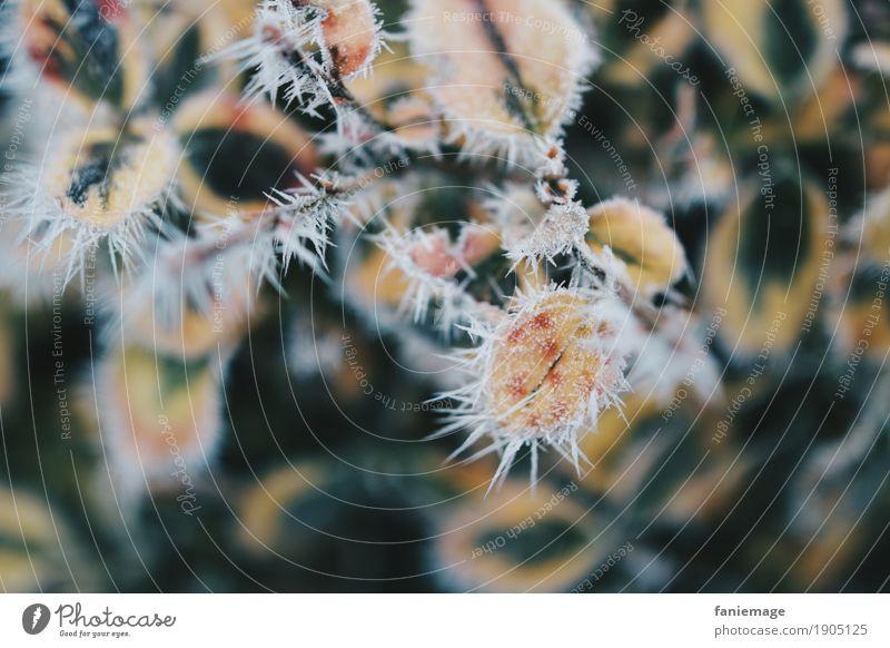 Winterstacheln Natur Eis Frost Schnee Schneefall ästhetisch kalt schön Ilex Ilexblatt stachelig Kaktus Raureif Eiskristall Zacken dunkelgrün gelb Wintertag