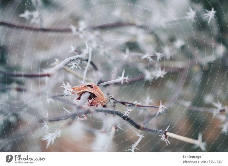vereistes Blatt Natur Eis Frost Schnee Schneefall Garten Park ästhetisch kalt schön Zweige u. Äste Winter Raureif Eiskristall weiß Zacken Spitze orange braun