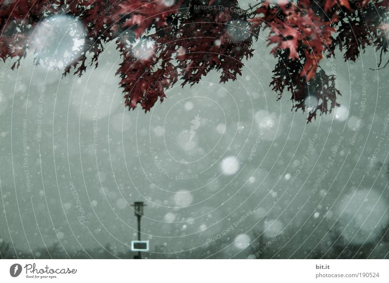 HERBST IM JANUAR Umwelt Natur Himmel Winter Klima Wetter schlechtes Wetter Nebel Eis Frost Schnee Schneefall Baum dunkel nass Schneeflocke Stimmung Laterne