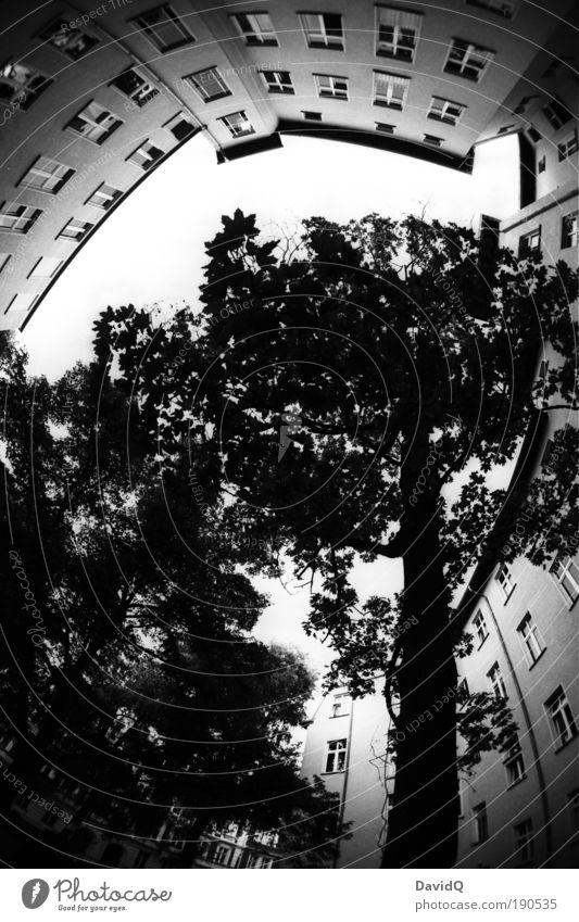 mittendrin Baum Stadt Pflanze Blatt Haus Fassade rund Gebäude Schwarzweißfoto Hinterhof Stadthaus Altstadt