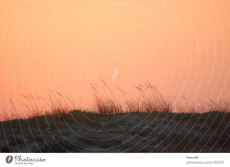 Roter Himmel Pflanze Erholung rot ruhig Tier schwarz Horizont Erde Wind Boden Schilfrohr Düne Halm Stranddüne Sommerurlaub Morgendämmerung