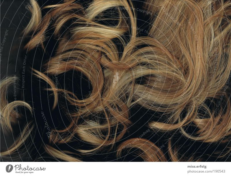 Haarige Angelegenheit Stil Haare & Frisuren harmonisch feminin Junge Frau Jugendliche blond langhaarig Locken fallen liegen Fröhlichkeit frisch glänzend
