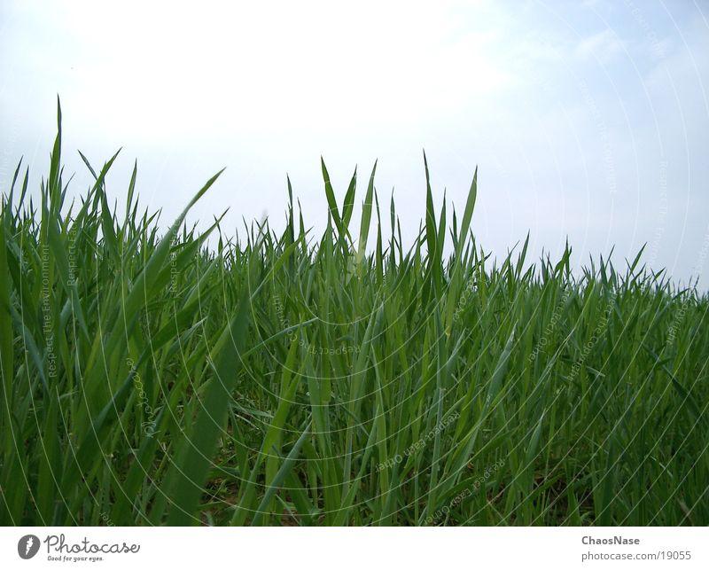 auf´n Wiesn Wiese Gras Urwald Halm