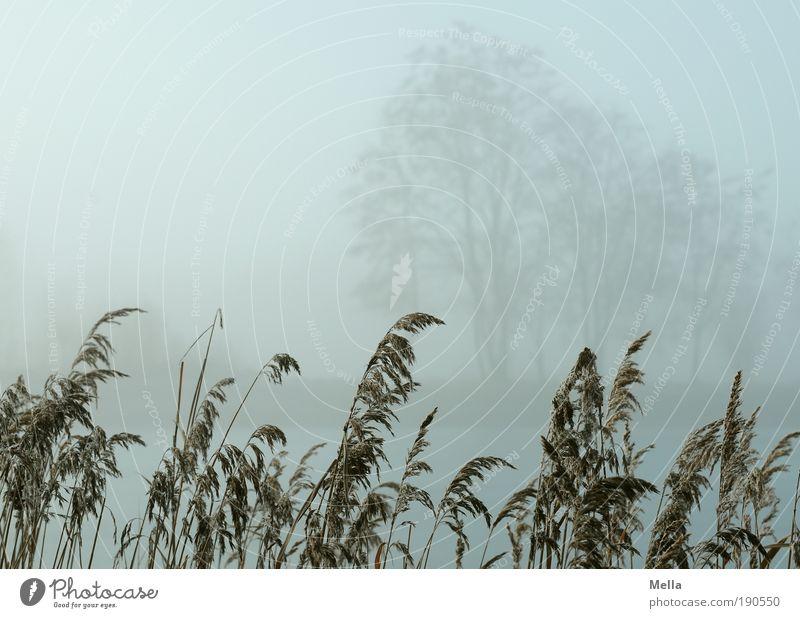 Sichtweite unter 100 m Umwelt Natur Landschaft Pflanze Herbst Winter Klima Klimawandel Wetter Nebel Baum Gras Park Seeufer Teich natürlich grau Idylle Pause