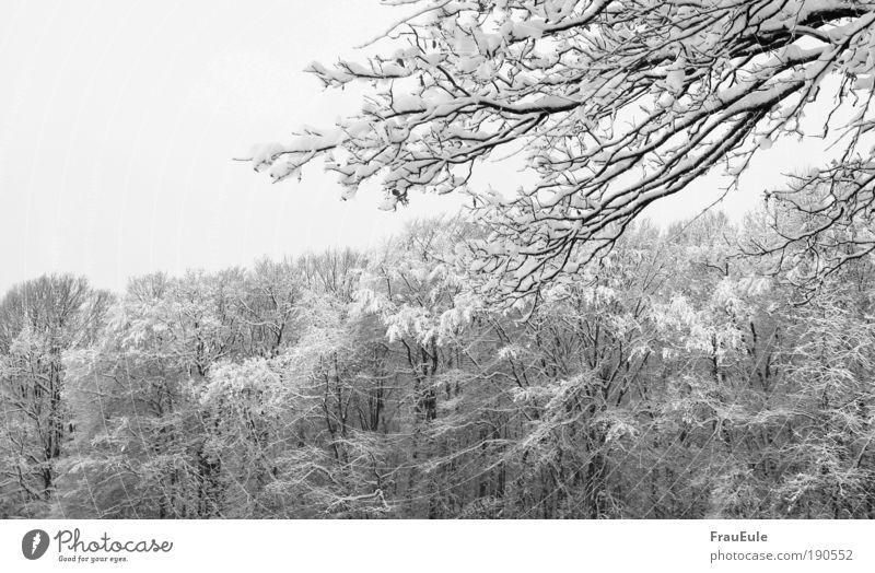 schneechaos Natur Landschaft Winter Eis Frost Schnee Baum Wald kalt schwarz weiß Schwarzweißfoto Außenaufnahme Strukturen & Formen Menschenleer Tag