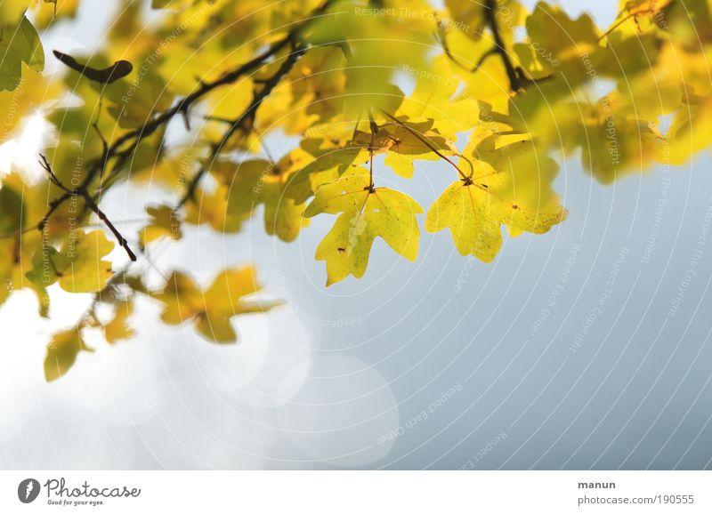 Herbstflimmern Natur blau Erholung Blatt ruhig gelb Herbst hell Park Zufriedenheit frisch Idylle gold Fröhlichkeit Ast Lebensfreude