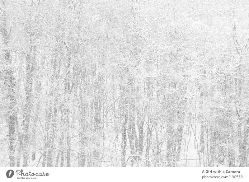 Why is our winter so white? Natur weiß Baum Winter Wolken Wald Schnee Freiheit grau träumen Schneefall Traurigkeit Landschaft hell Umwelt nass