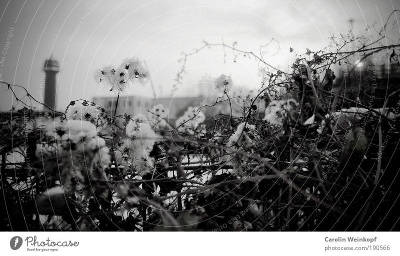 Ostkreuz. Himmel Eis Frost Schnee Pflanze Blatt Blüte Wildpflanze Sträucher Stadtrand Menschenleer Haus Hochhaus Bahnhof Bauwerk Gebäude Turm alt ästhetisch