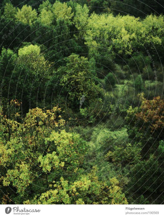 Ja ja so grün grün grün... Natur Baum Sommer Blatt Wald Erholung Arbeit & Erwerbstätigkeit Holz Park Landschaft Kraft Umwelt Sträucher authentisch Klima