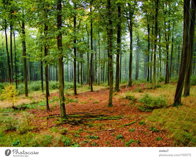 hochstämmig Herbst Nebel Wald Spessart frisch nachhaltig natürlich Sauberkeit schön braun gelb grün Duft Einsamkeit Umwelt Buchenwald Nebelstimmung unberührt