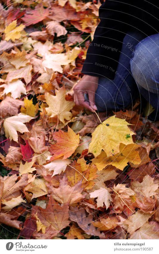 . Frau Mensch Natur Hand Blatt ruhig Erwachsene Farbe gelb Herbst kalt Umwelt träumen Ausflug Hoffnung trist