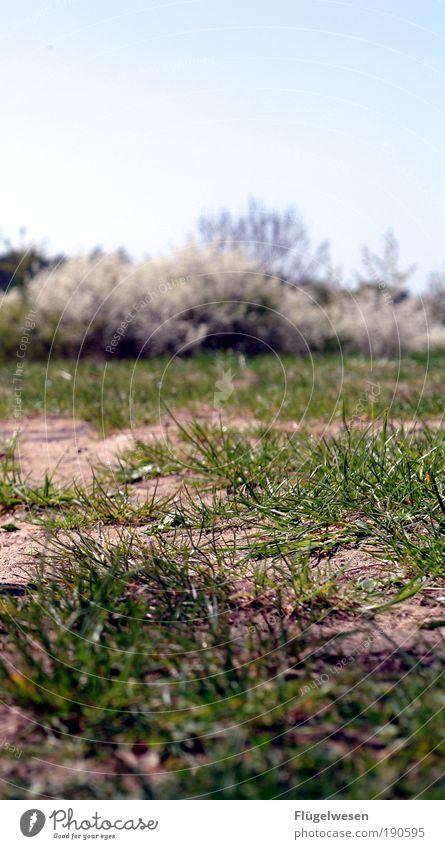 Tim(s) Wiese Himmel grün Pflanze Sommer Gras Park Freizeit & Hobby frisch Lifestyle Sträucher Rasen Schutz trocken berühren Gelassenheit